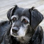 Make changes to accommodate your aging dog