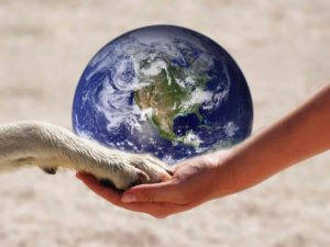 reduce your dog's carbon footprint: owner holds dog's paw while holding planet