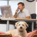 Adding office pets boosts morale, creativity