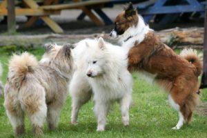 dog park bully