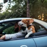 Dog travel safety tips: Whether you're on a quick outing across town or a long road trip, your pet should always be restrained while you're behind the wheel.