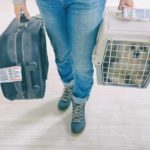 Flying with your dog: Make sure your travel crate meets the airline's requirements.