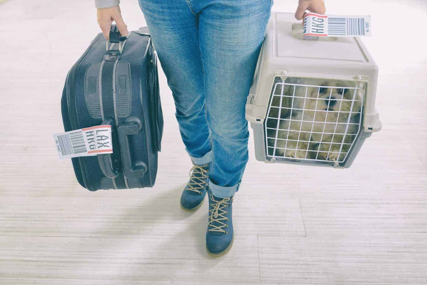 Woman carries dog in crate and suitcase before flying with your dog.