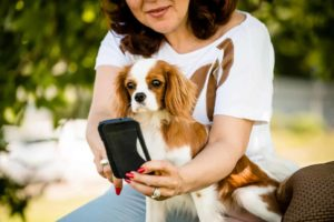 Security camera systems, GPS-powered wearables and automated food dispensers are three of today's most popular high-tech dog gadgets.