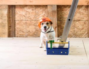 To keep your dog safe during home renovations consider taking your dog to a friend's house to keep him away from the noise.