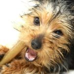 Dental chews and water additives aren't a substitute for regular toothbrushing. But they are an excellent addition to a dog's oral hygiene.