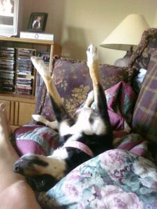 dog sleep position: Dogs that sleep with their legs in the air are confident and comfortable in their surroundings.