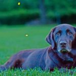 Keep your dog pest free