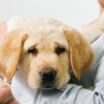 Protect your dog against Lyme disease