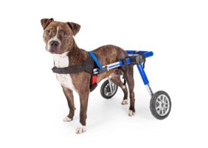 Rescuing a special needs dog is a huge commitment, and you need to be completely ready before you sign the adoption paperwork.
