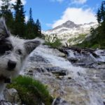 Dog enjoys standing by mountain stream. Take steps to hike with your dog. Protect paws, bring water, don't forget the leash and make sure your dog is healthy and in good shape for the hike.