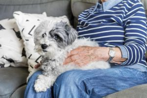 Senior woman holds poodle. Seniors benefit from caring for pets.