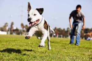 run with your dog and help him channel his energy positively