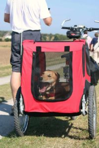 Make biking with your dog safer by using a trailer like this Labrador retriever who lounges in a red trailer.