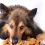 Under the 25 percent rule for dog food, the food must contain at least 25 percent of the ingredients in the name, not counting water used for processing.