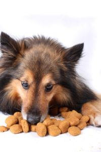 German shepherd eats dog kibble. Under the 25 percent rule for dog food, the food must contain at least 25 percent of the ingredients in the name, not counting water used for processing.