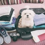Common dog travel mistakes include picking the wrong time to travel, failing to properly restrain your dog and forgetting to update your dog's microchip.