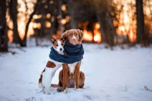 A pair of dogs snuggle together on snowy field. Use our dog winter safety guide to keep your dog safe.