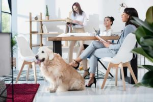 dogs boost work productivity