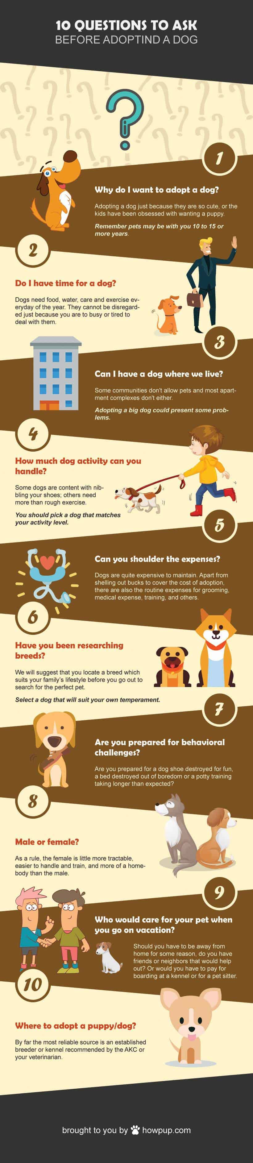 Adopting a dog guide courtesy howpup.com