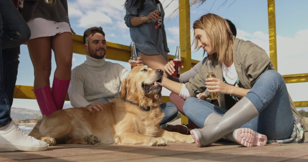 Golden retriever at beach party. Dogs make people more social by serving as icebreakers and conversation starters. They also ease tension and make people feel more calm and assured.