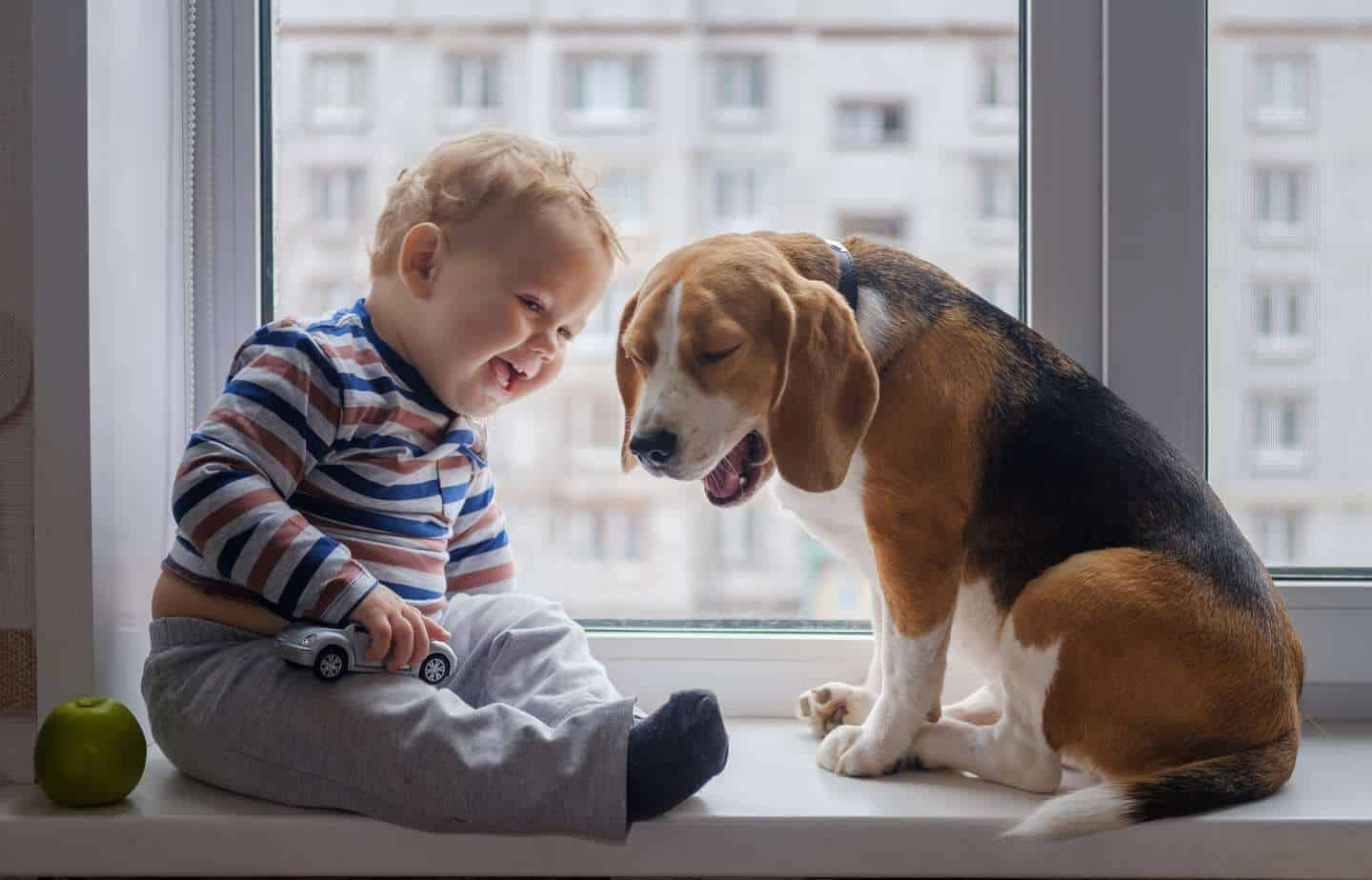 Image result for dogs for apartment living