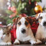 cbd oil eases pet holiday stress: cat and two dogs under the Christmas tree