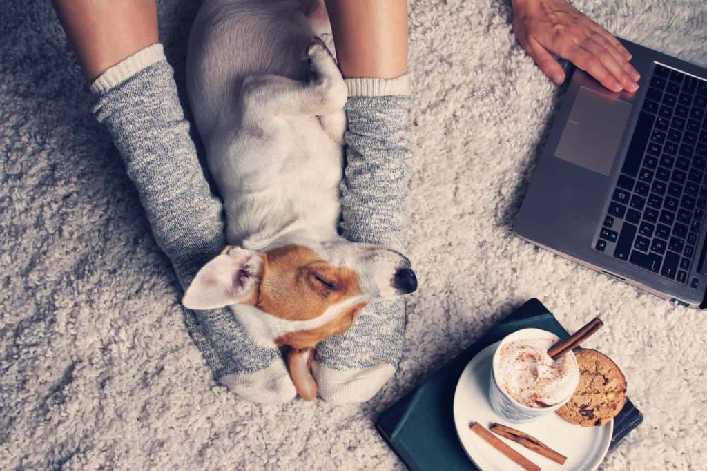 Adopting a dog after a breakup: Woman snuggles with dog by her laptop.