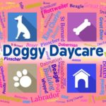Want to start a doggy daycare? Here's how