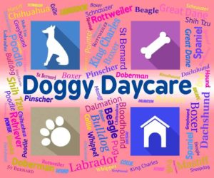 doggy daycare graphic