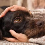 Dogs help ease the pain of chronic illnesses
