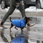 Winter dog-walking tips: Consider dressing your dog like this dachshund in a winter coat.