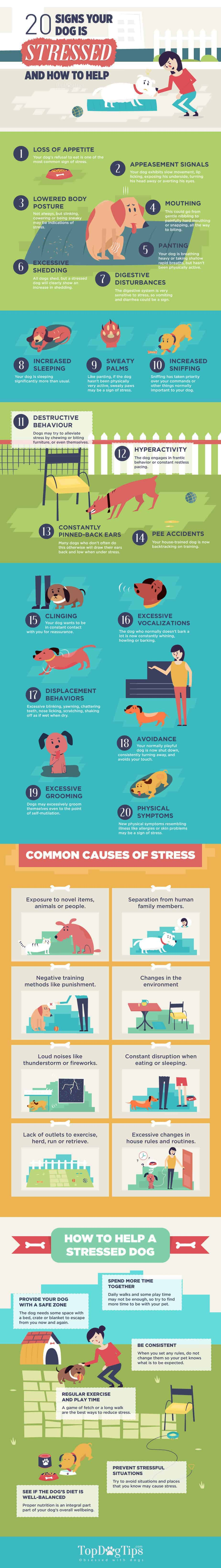 dog stress warning signs graphic