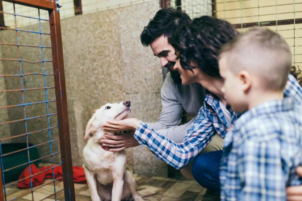 Man, woman and child consider adopting a rescue dog at a shelter.