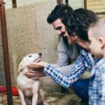 3 things you need to know before adopting a rescue dog