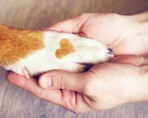 woman holds a dog's paw, choosing a dog takes care