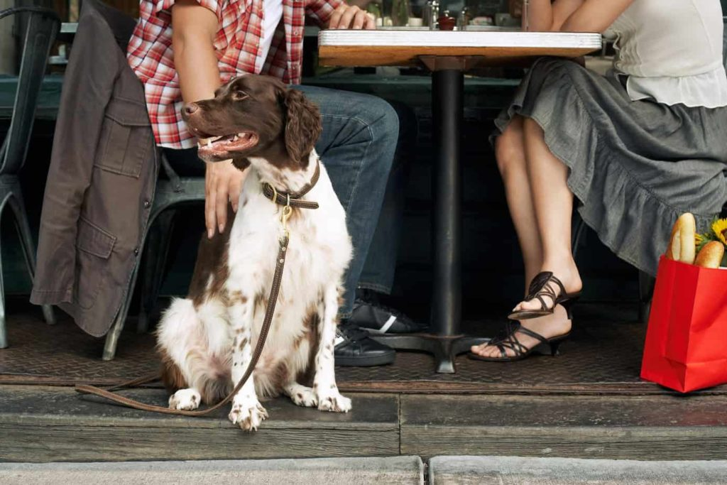 Man and woman sit outside a cafe, an example of dog-friendly businesses