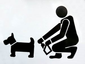 clean up dog poop to avoid dog poop dangers