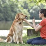 Use essential dog commands to ensure your dog is well behaved.