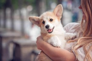 woman cuddles corgi puppy