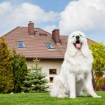 guard dogs help protect homes