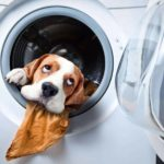 whimsical image of dog in washing machine. remove pet odor by regularly washing pet beds