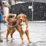 7 winter dog-walking safety tips