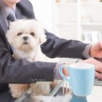 business man at work with small dog on his lap.