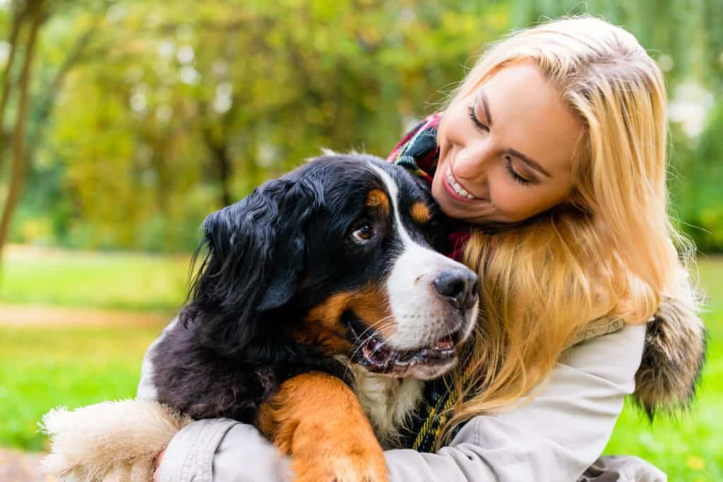 Woman hugs Bernese mountain dog. Living with dogs improves owners' health, happiness by boosting exercise, lowering cholesterol and blood pressure and reducing loneliness.