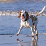 dog runs on beach. Use 5 tips to keep dogs happy and healthy