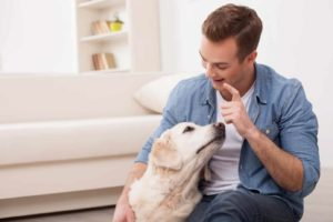 Man plays with Labrador dog. Use first-time dog owner guide.