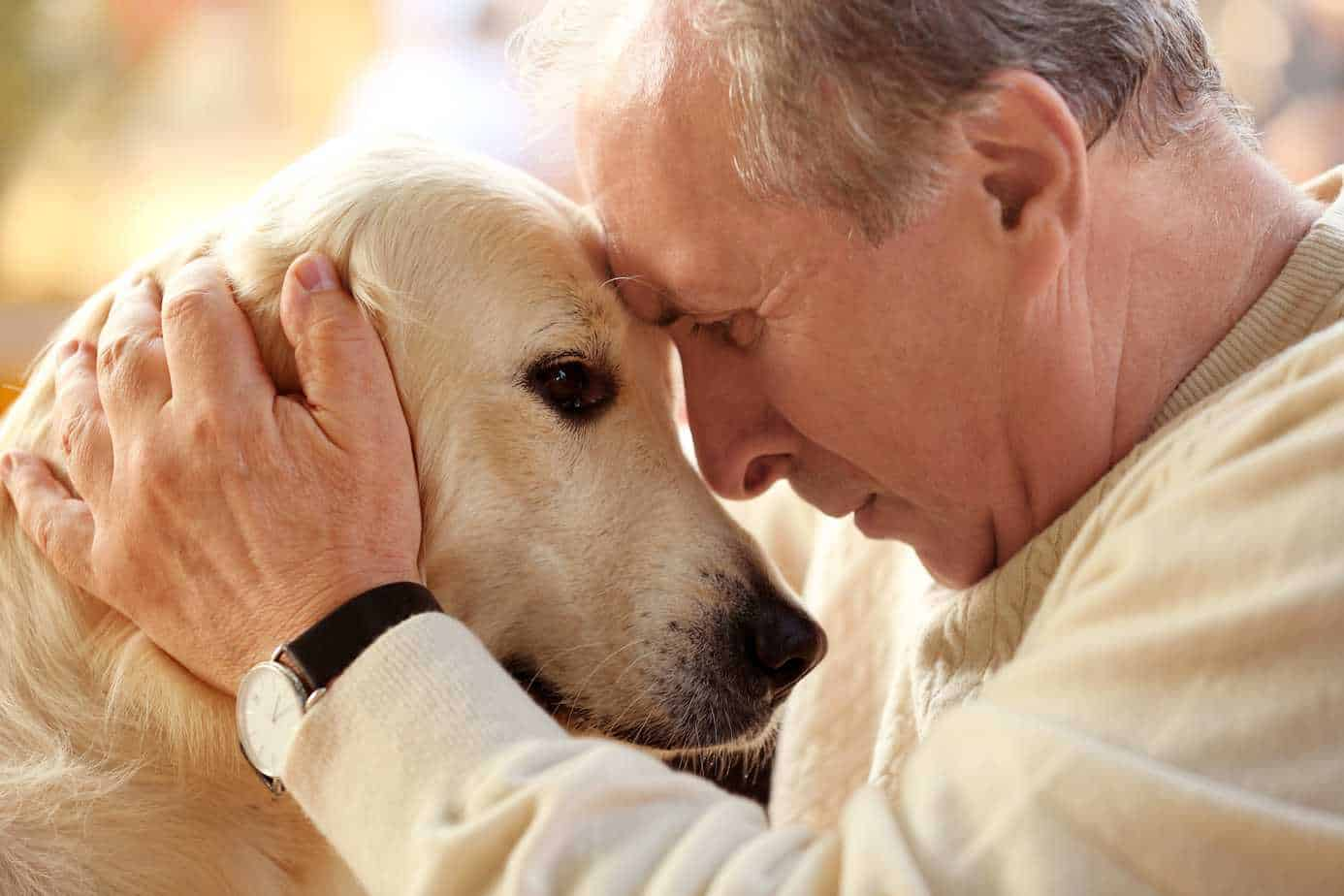 Man cuddles with yellow Labrador retriever. Labs rank high on lists of most popular dog breeds.
