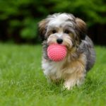 Americans spent more than $15 billion on supplies including dog toys.