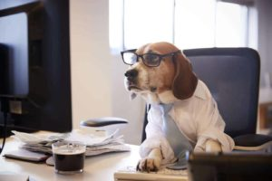 Beagle wearing shirt, tie and glasses while working at computer in office. Apply work lessons from your dog to be more effective.
